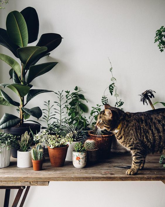Rośliny domowe niebezpieczne dla kota który je zje