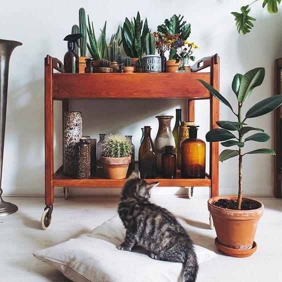 Lista roślin domowych niebezpiecznych dla kota