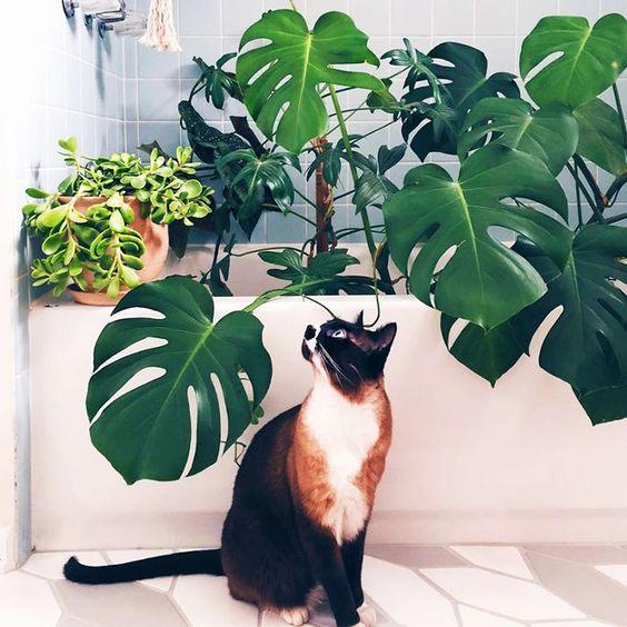 Rośliny domowe niebezpieczne dla kota