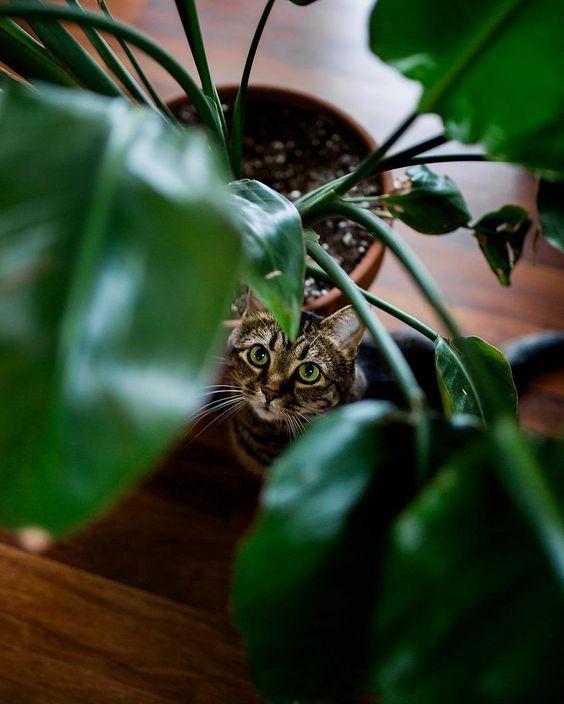 Rośliny domowe niebezpieczne dla kota gatunki